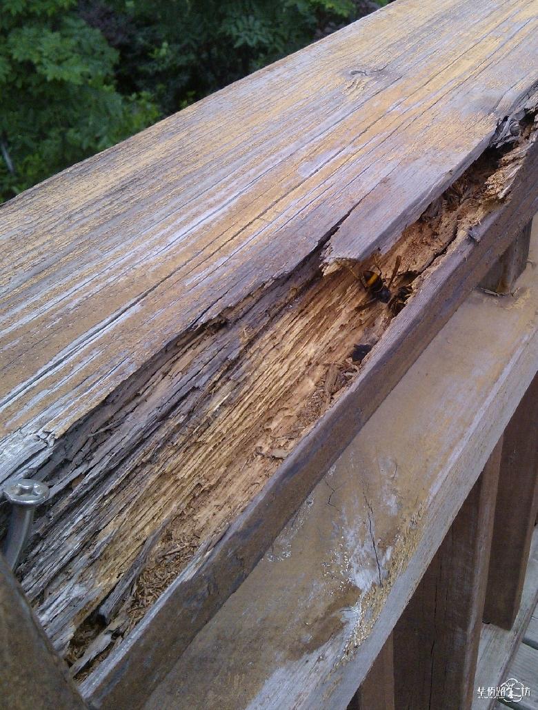 北端两侧破损的木栏杆处有马蜂飞舞