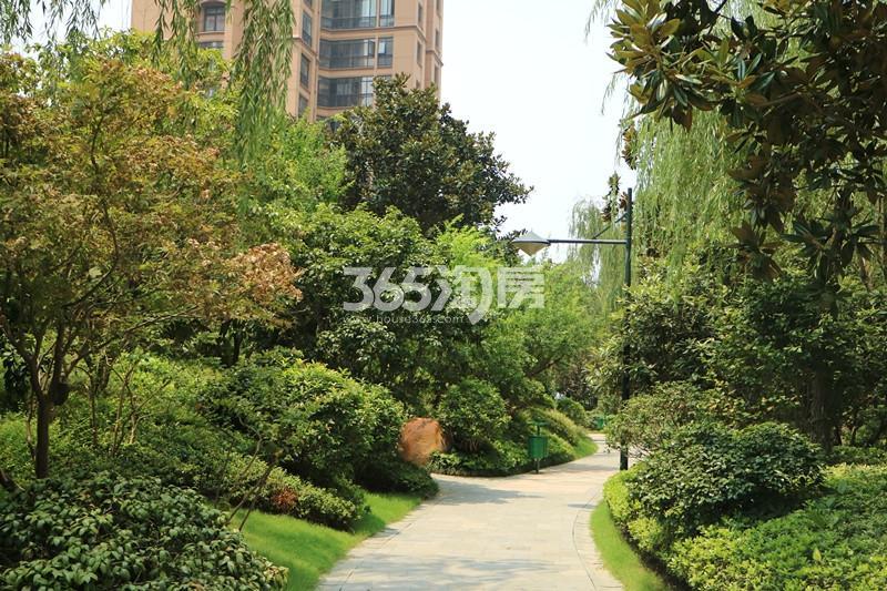 雅居乐滨江国际小区绿化实景图(9.13)